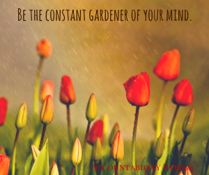 Be the constant gardener of your mind. (1)